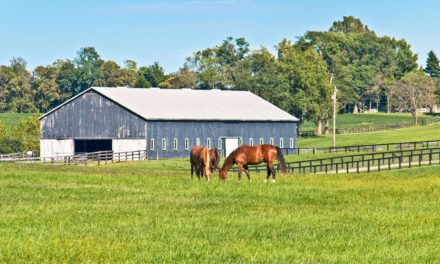 Horse Farm-Sitting Peace of Mind