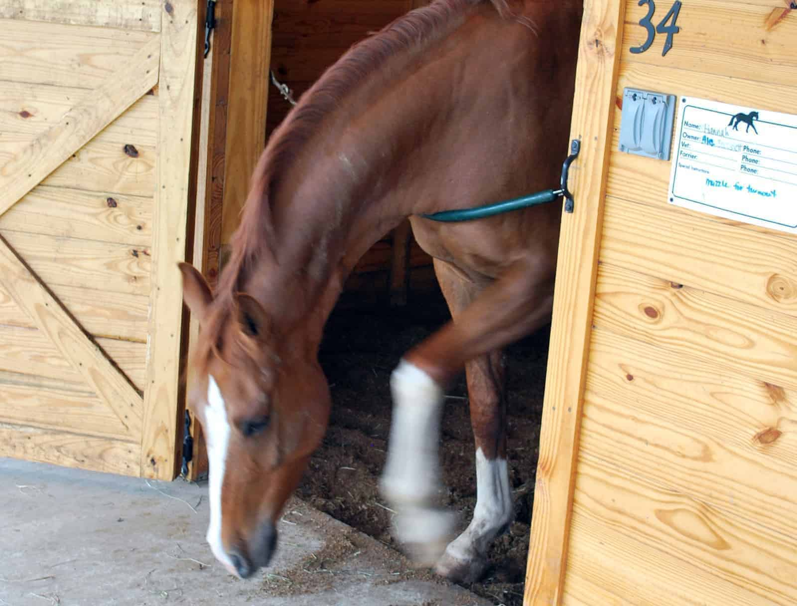 pawing in stall
