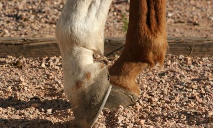 A Window Into Your Horse's Sole