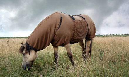 Insect Bite Hypersensitivity and Pruritus in Horses