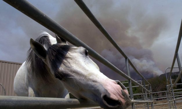 Smoke From Wildfires and Horse Respiratory Health