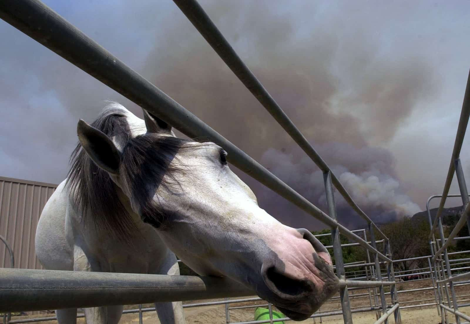Supplementing to Support Equine Lung Health