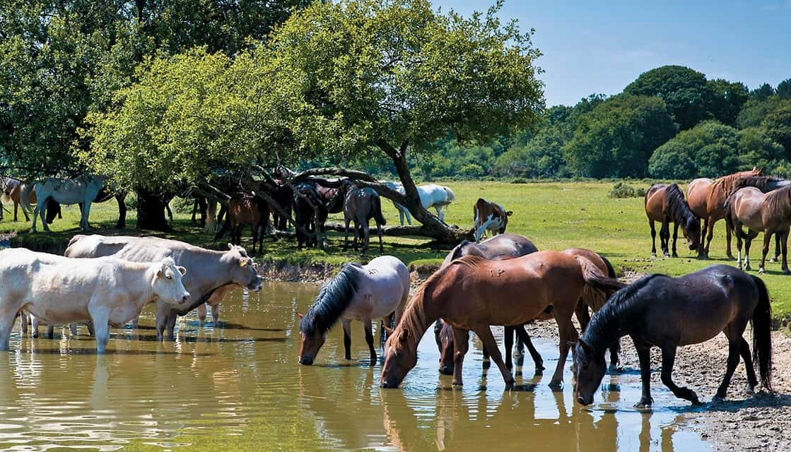 Protect Your Horse From Leptospirosis The Horse