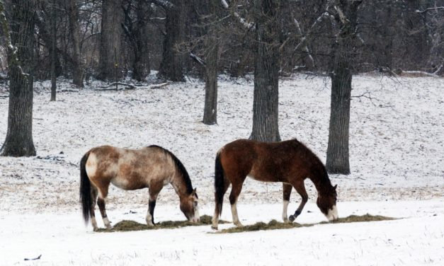 Do Obese Horses Spend More Time Eating Than Lean Ones?
