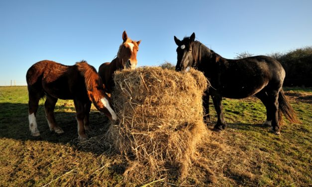 Where is Botulism a Threat to Horses?