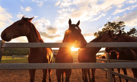 New South Wales Officials Seek Input on Horse Identification