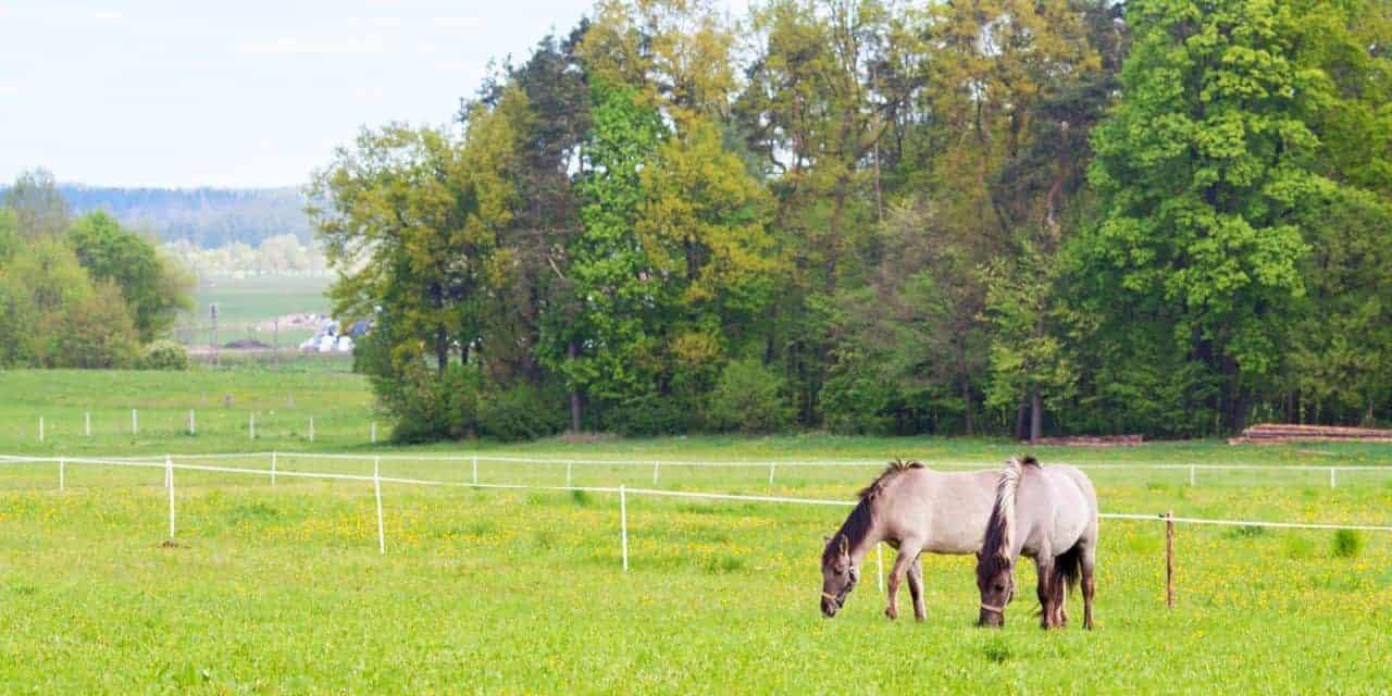 Pasture Management 101: Renovating Horse Fields