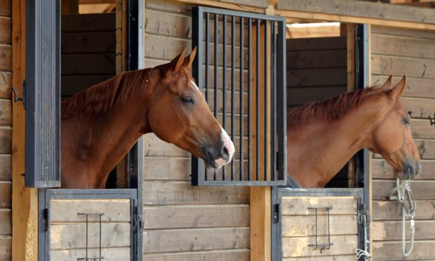 Horse Boarding Barn Best Practices