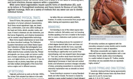 Identification Methods for Horses