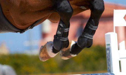 <em>The Horse</em>, Dechra Partner for Equine Bone and Joint Health Awareness Week