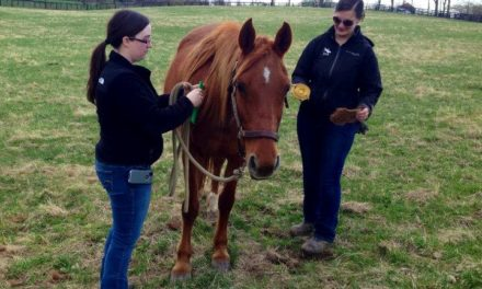 Rehabilitating, Refeeding, and Rehoming Rescue Horses