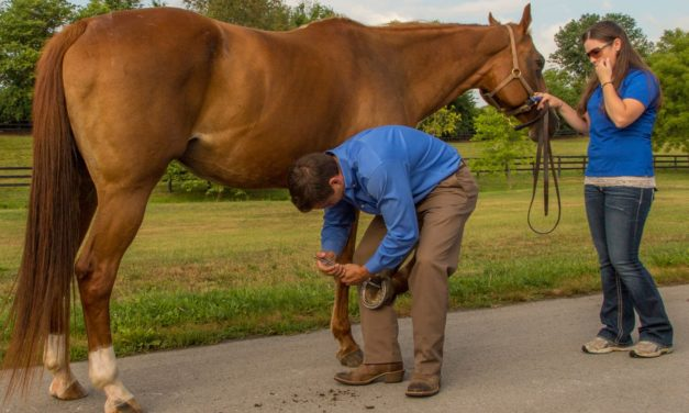 Caudal Heel Pain or Navicular: What's the Right Term?
