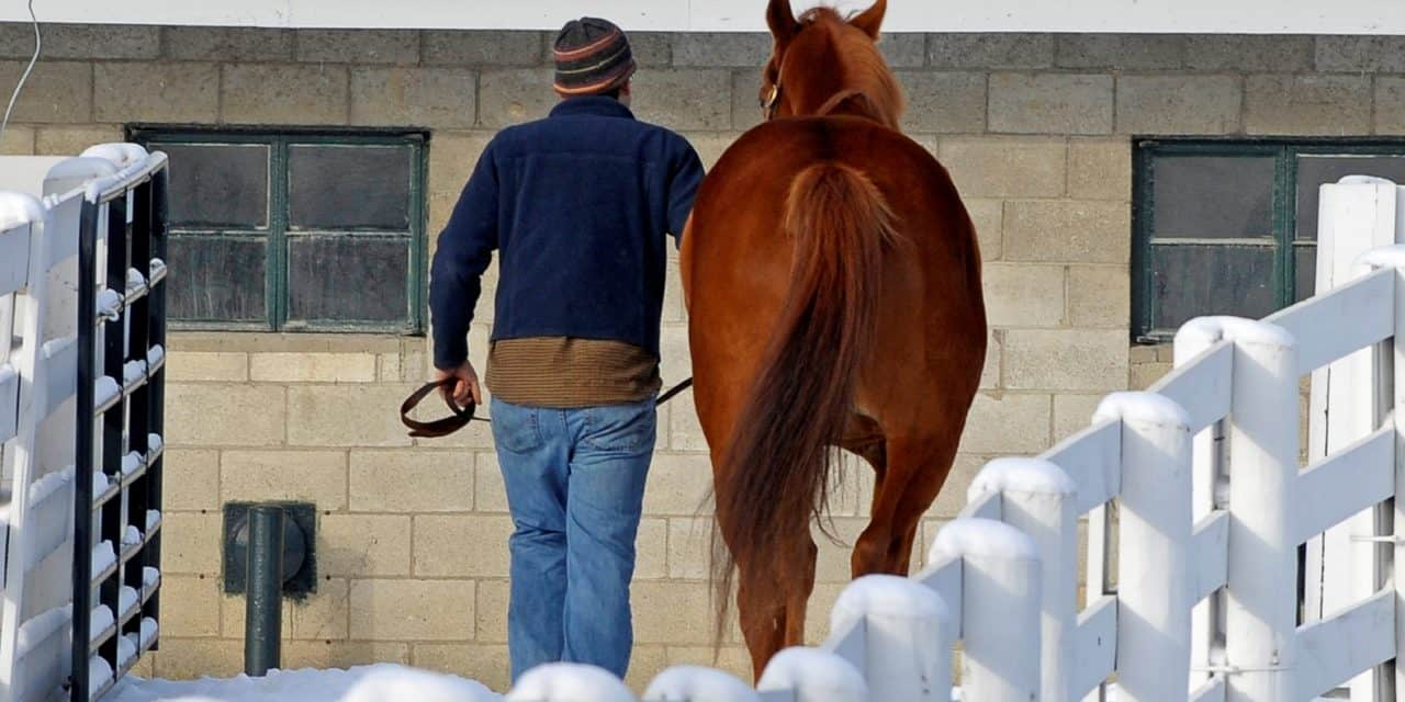 Winter Horse and Barn Care