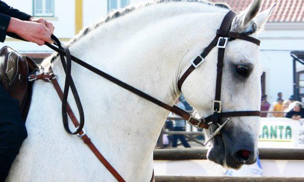 EVA Prevalence in Spanish Horses