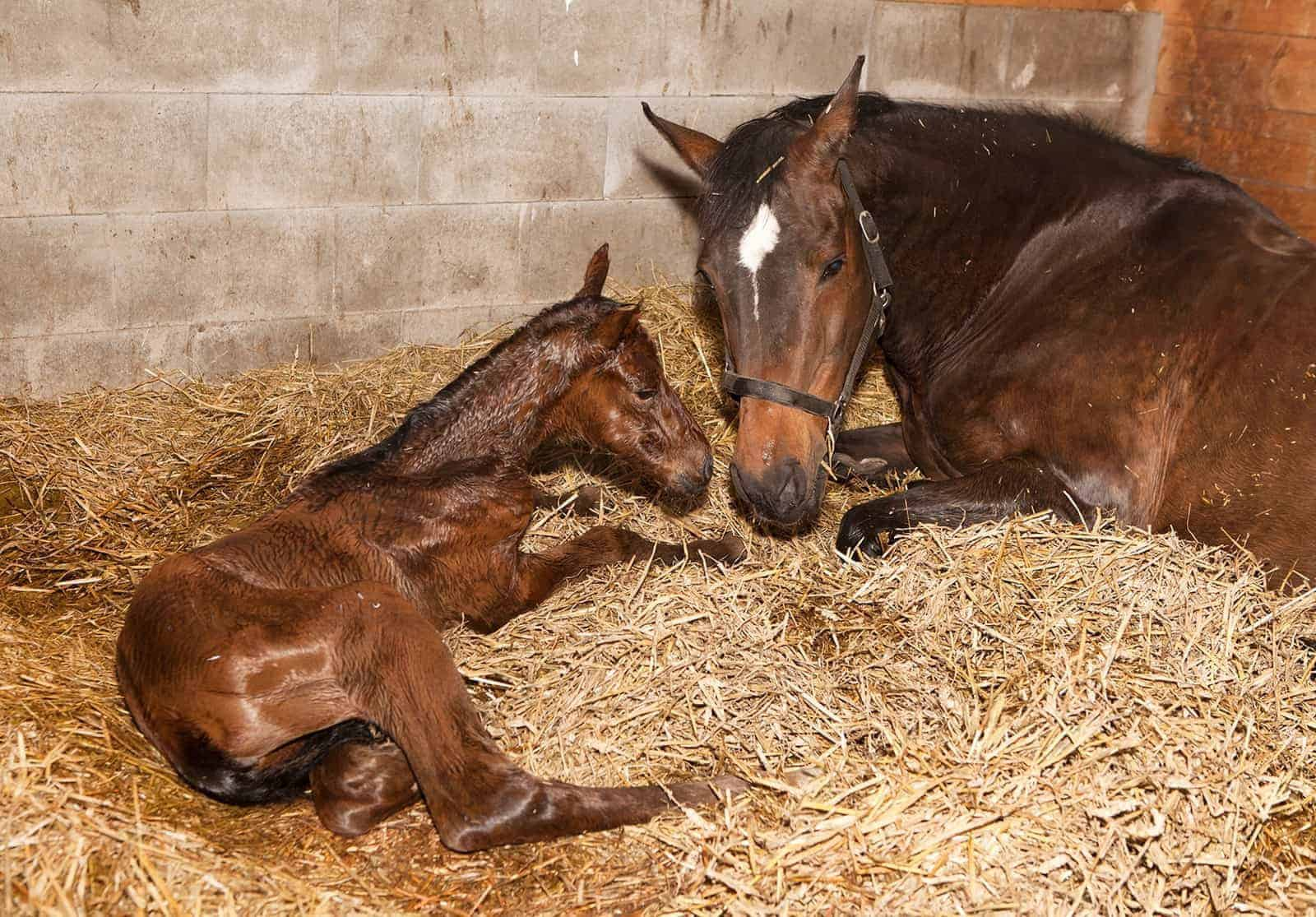 Normal Mare And Newborn Foal Behavior The Horse