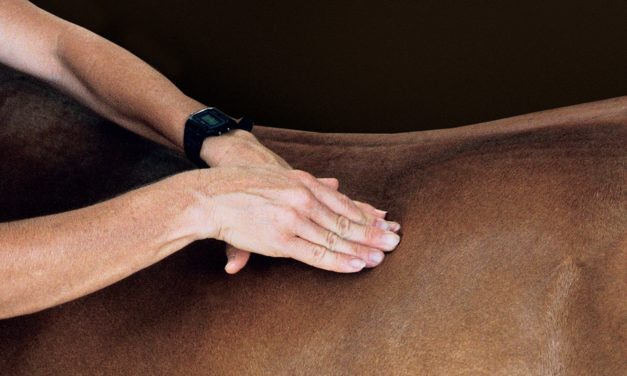 Equine Sports Therapy: How It Can Help Your Horse Heal
