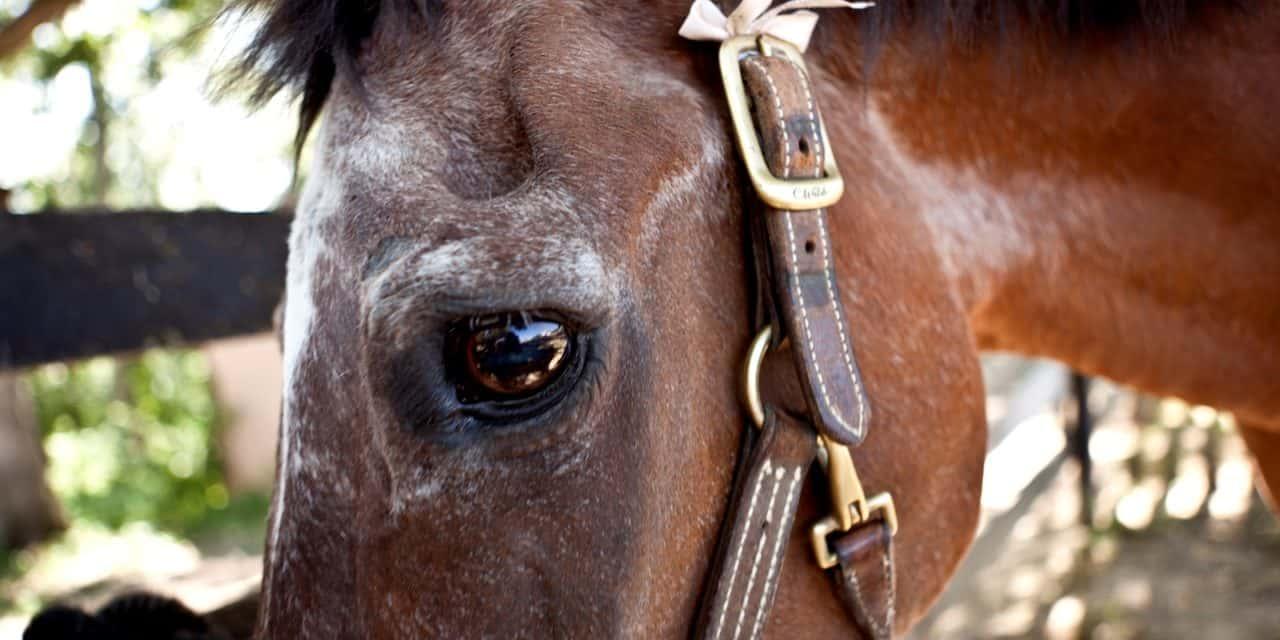 Equine Life Stages: Senior Horses