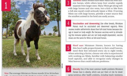 15 Miniature Horse Health Facts