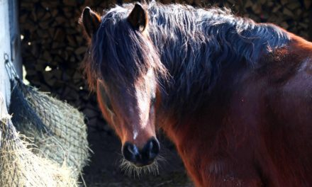 Ideal Feed Frequency for Horses