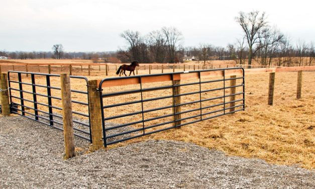 Pasture Management 101: High-Traffic Areas and Overgrowth