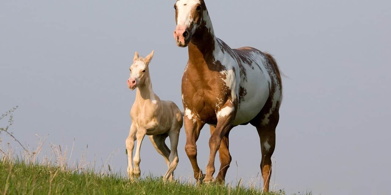 Understanding Equine Genetic Diseases