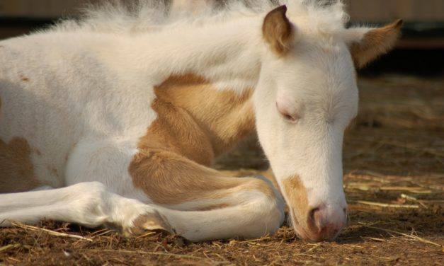 The Best Defense: Maximizing Foal Immunity