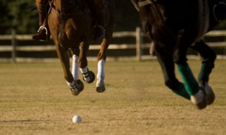 A Whole-Horse Approach to Managing Joint Disease