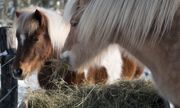 Free-Feeding Hay: When Will My Horse Slow Down?