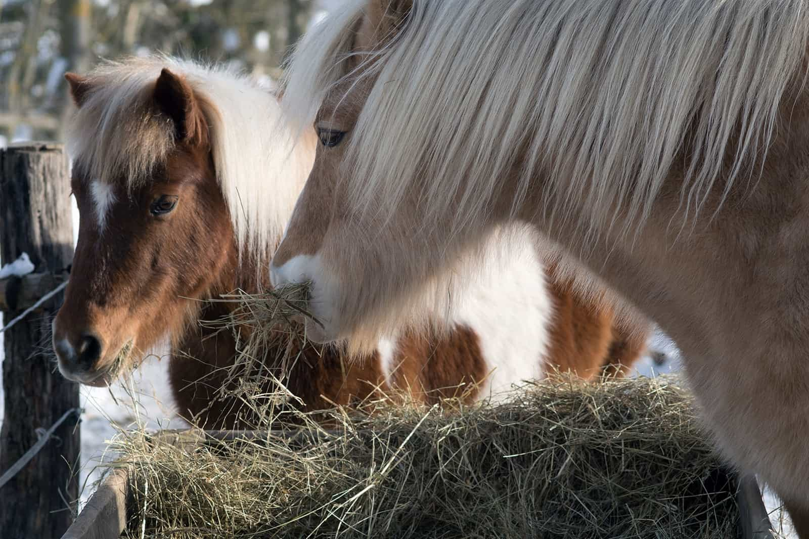 Free-Feeding Hay: When Will My Horse