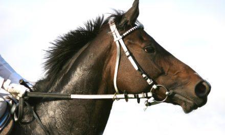 The Bleeding Edge of EIPH in Horses