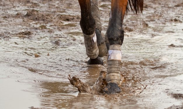Can Boots or Wraps Prevent Scratches in Horses?