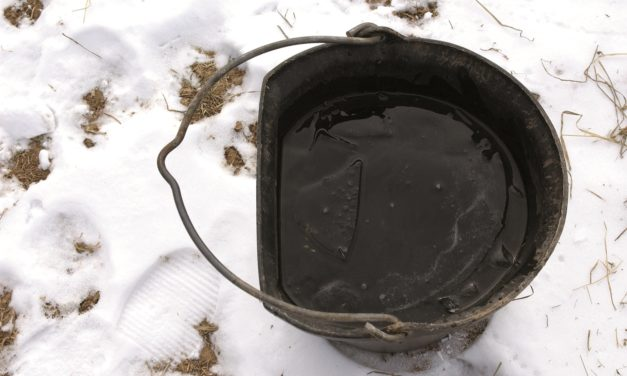 Poll Recap: Winter Water Sources for Horses