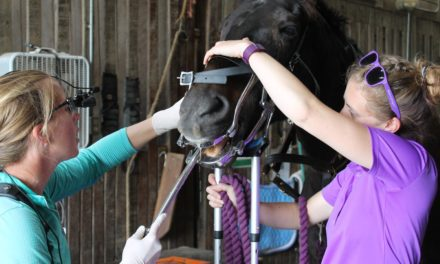 Dental Exams and Disease Spread: Is Your Horse Safe?