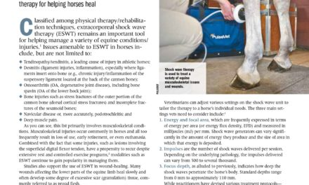 Benefits of Extracorporeal Shock Wave Therapy in Horses