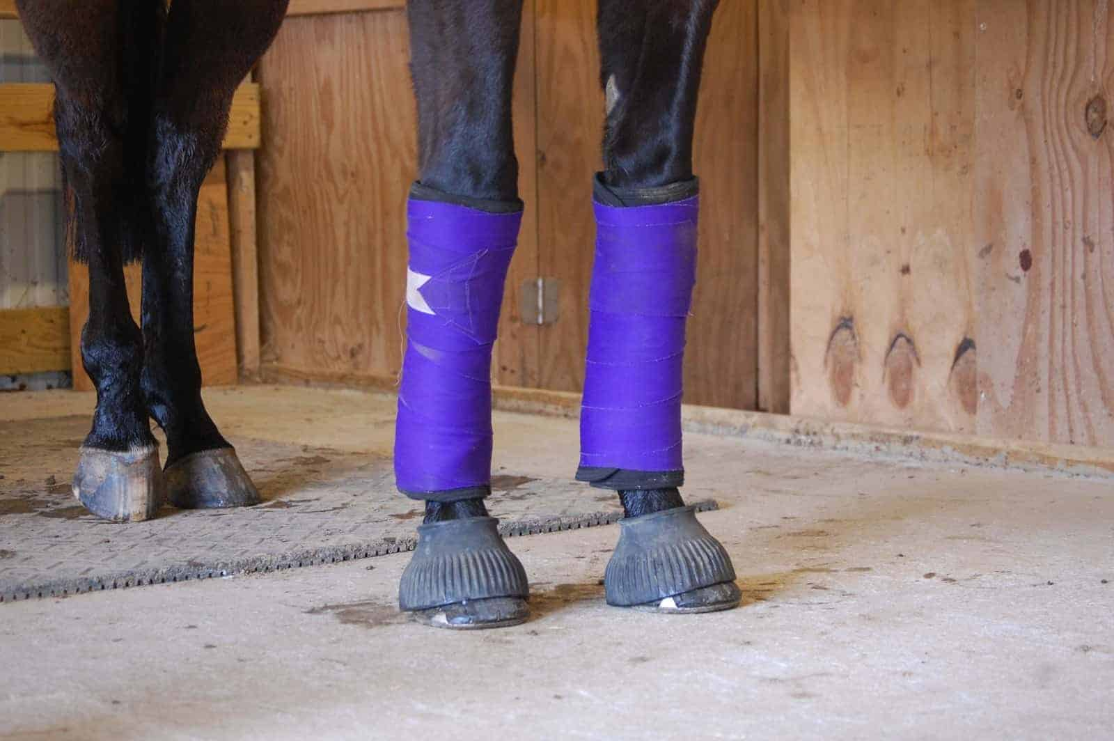 What You Need to Know About Equine Leg Bandaging