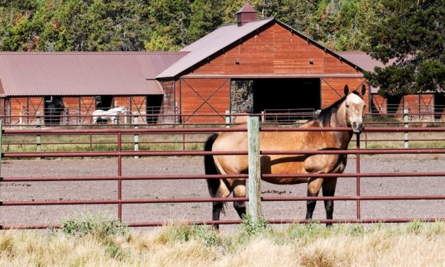 The Latest on Feeding Laminitic Horses