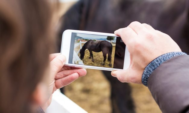 Technology Connecting Veterinarians, Clients