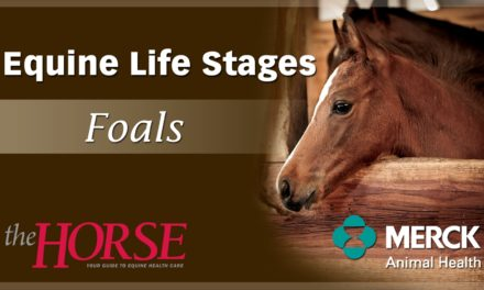 Mare Check Frequency on Foal Watch