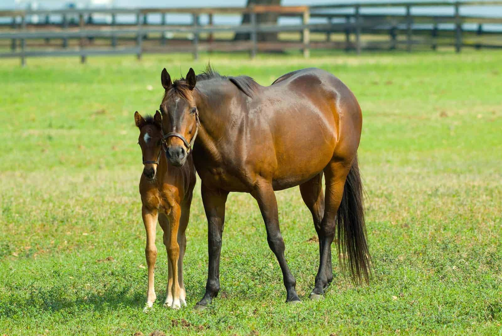 How to Get a Foal From a Performance Mare