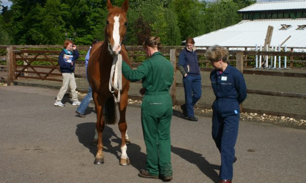 British Horse Health Survey Trends Reflect Current Research