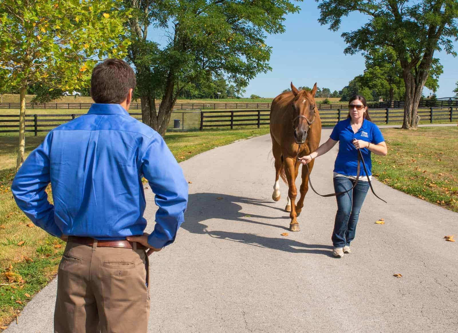 Top Equine Surgery and Lameness Studies of 2018