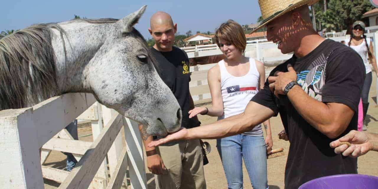 Therapeutic Riding Horses Don't Experience Undue Stress