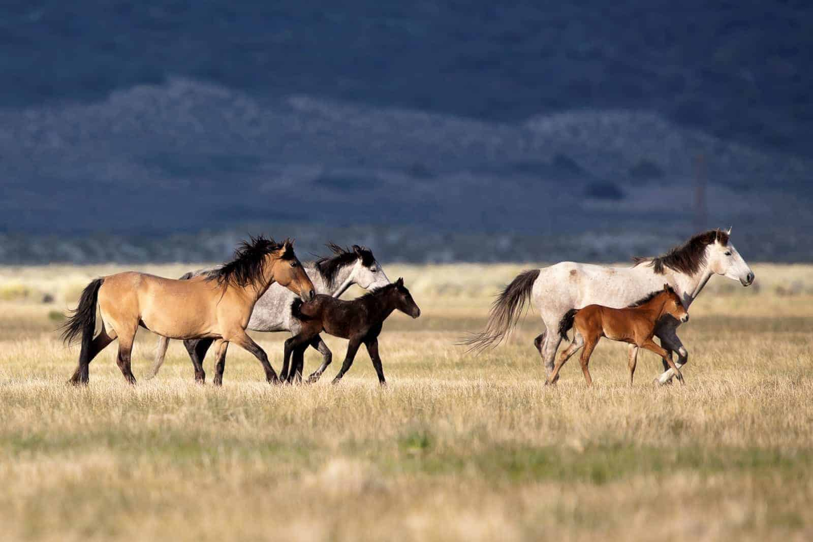 Can You Care for Wild Horses? BLM Seeking Off-Range Corral Bids