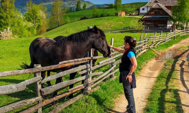 Horse Ownership and Attractive Nuisance Risk