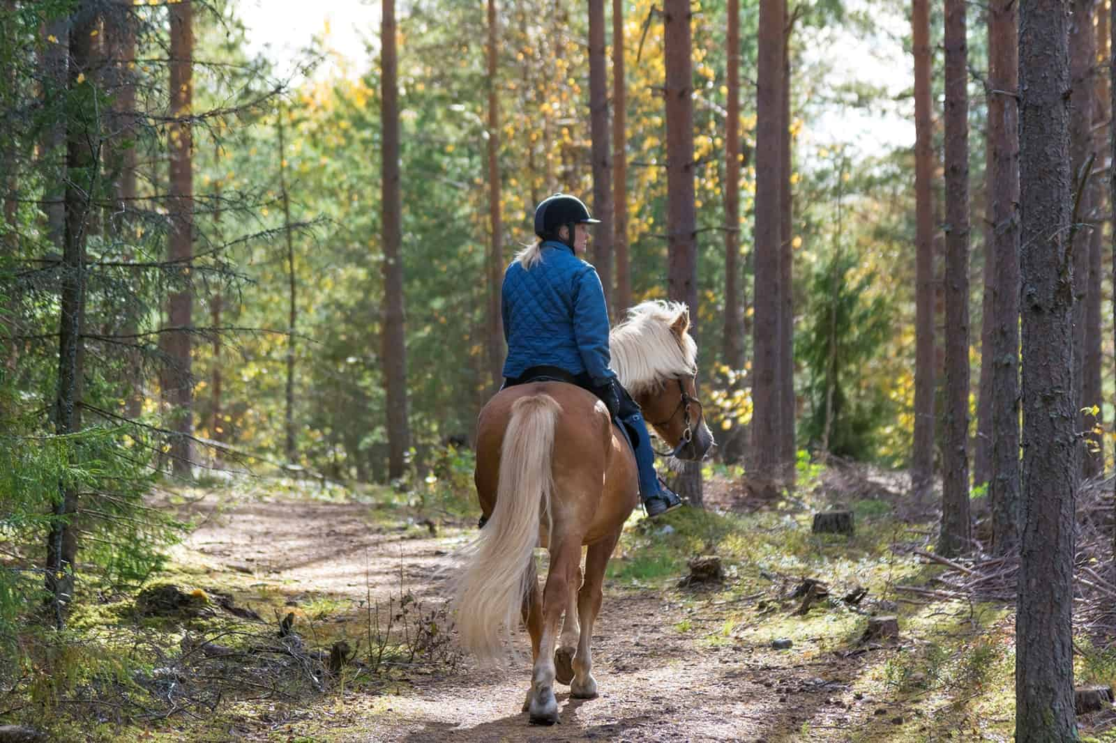 Be a Good Steward of Public Land: 10 Tips for Equestrian Trail Riders