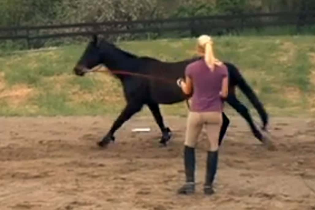 How To Properly Longe Your Horse The Horse