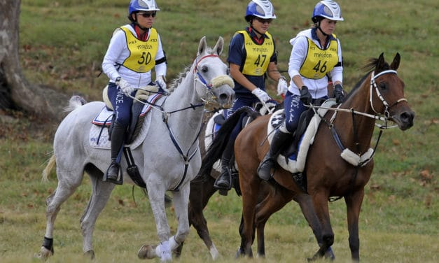 For Good Endurance in Horses, Feed for the Right Gut Bacteria