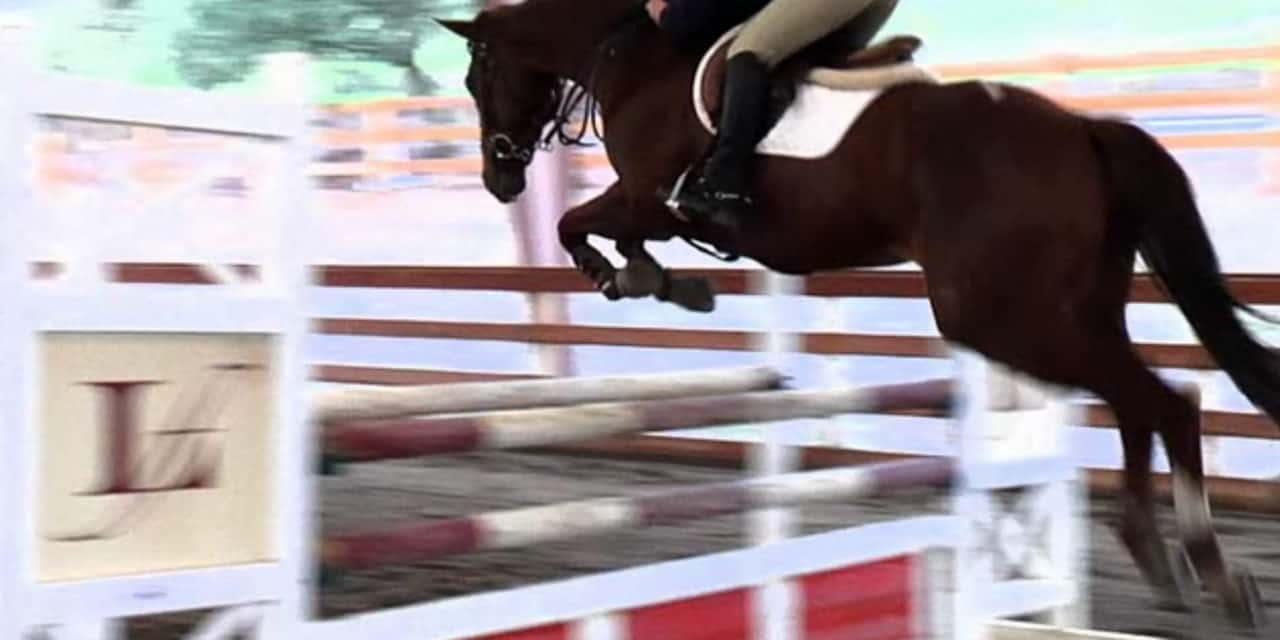 Set Ground Lines For Jumps The Horse