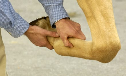 Objective Determination of Lameness in the Horse