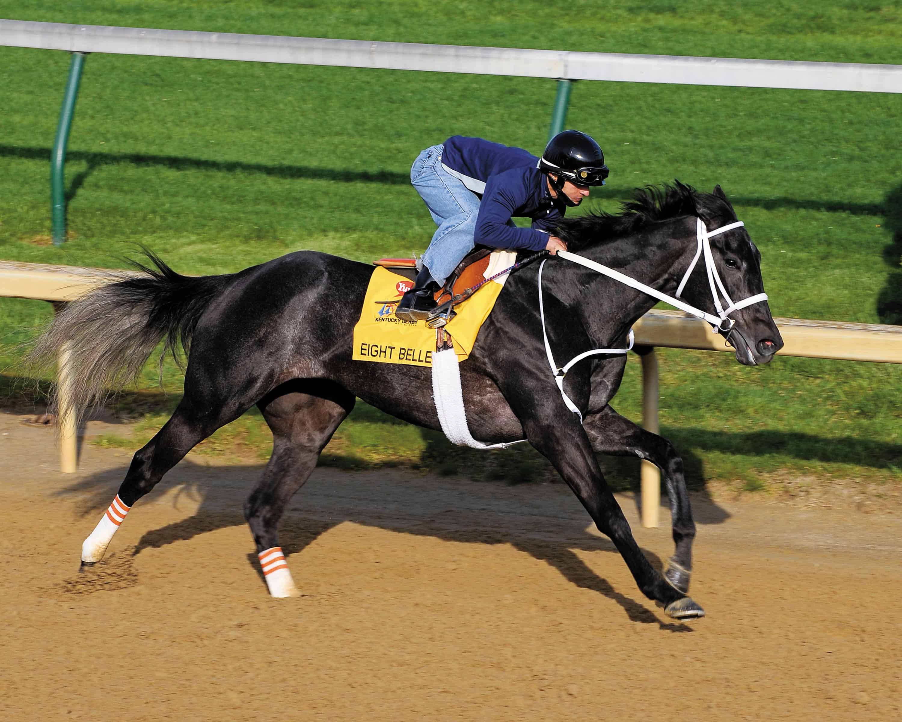 Studying Catastrophic Racehorse Breakdowns Research That Can Save